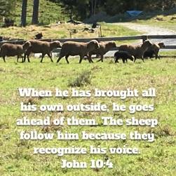 john-10-verse-4